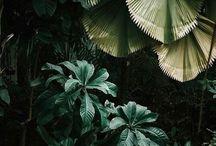 botanical