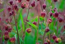 Blomst plante busk