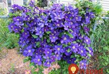 zahradne kvety
