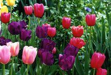 Spring Bulb Gardens