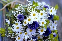 Cornflower (Bachelor's Buttons) Wedding Flowers / Beautiful designs and inspirations for using cornflowers (also known as Bachelor Buttons) in your wedding.  Check out free flowers tutorials for bridal bouquets, corsages, boutonnieres, centerpieces and more.  Buy wholesale flowers and discount florist supplies.