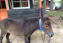 Paarden en Pony s