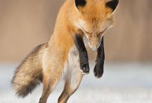 megrajzolt foxok