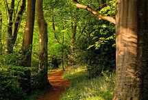 Wooded Paths   Forests   Spaces
