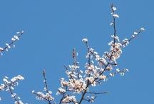 Quattro Staggioni: Primavera