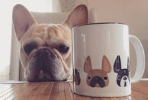 French Bulldogs <3