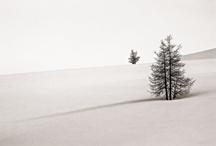 Nature / http://www.facebook.com/Christoph.Oberschneider.Photography
