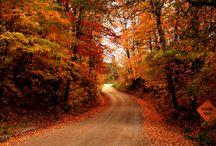 Autumn  / by Chris Gilbert