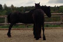 Koně a dvounožci