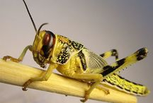 Fastest Insects / Fastest Insects