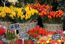 Fresh Flower Markets