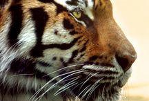 Animales / Animales impresionantes