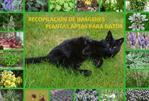 plantas aptas para gatos