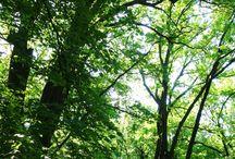 Закарпатье май 2015 / Природа Закарпатья