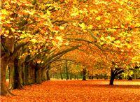 Autumn // last, loveliest smile
