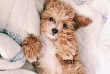 puppies so cute you will die