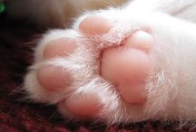 Kitteh Paws / If these photos don't make you smile and want to kiss 'lil pink piggy kitty toes, nothing will! <3