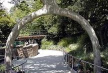 Ordinary Trees