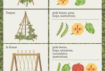 PLANTS - Vertical Garden