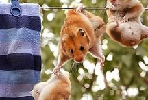 Hamster Love <3