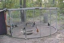 Kippenrennen