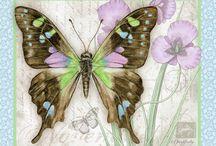 Imagens - Borboletas / Pintura, ilustração e arte decorativa