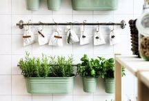 Growing home greens / How to grow your own greens in apartment