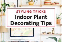 Pflanzen indoor Deko