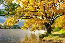 Árvores maravilhosas !