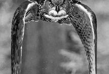 guficivettepipistrelli