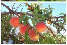 Obst, Gemüse, Kräuter, Pflanzen usw.
