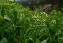 herbalishious
