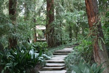Landscaping Ideas / by Sheila Boulanger