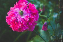 Flowers Flow by Klavdia