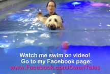 Owen Swimming in the City! / Owen loves to swim.  And he is a big swimmer in NYC - in a POOL !! Yep.  A dog pool - he loves it!  Here are his videos.  You can also check out his videos at www.facebook.com/owentales   or www.owentales.com