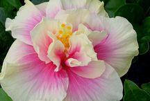 Garden flover / Orchid