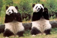 pandas / by PHYLLIS TATE