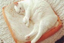 猫食パンクッション
