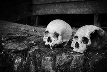 Skulls ~ Bones