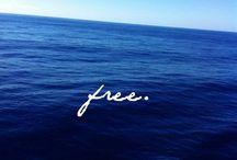 Moře free