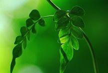 Serene Green / My favorite color!