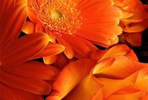 Orange / by Loreen Álvarez Browne🌷