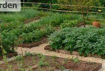 Garden - Planning / by Debby Timson