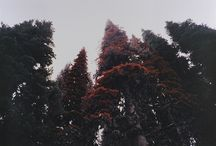 prythian: autumn court / high lord: beron