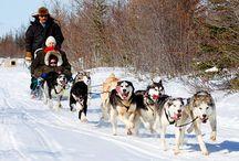 Dog Sledding in Churchill, Manitoba CANADA / Come Dog-Sledding in Churchill, Manitoba CANADA!