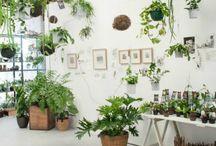Espacios con plantas