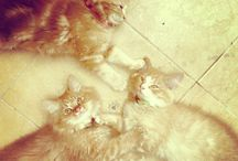 My Cats. / I love them. Cute and playful