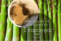 Τα πάντα για τα ινδικά χοιρίδια by GiannaPiggies / Επιτρεπόμενα λαχανικά, ιατρικά άρθρα και πολλές χρήσιμες πληροφορίες που αφορούν τα ινδικά χοιρίδια απο το www.giannapiggies.blogspot.gr