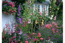 Ogrodnictwo-wiejski ogród