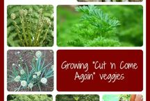 Garden Tips and How To / by Karen Sommers